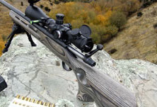 Ruger .204 Rifle